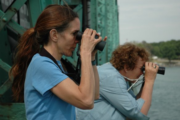 Linda Wires and Francie Cuthbert counting Common Terns on Grosse Ile